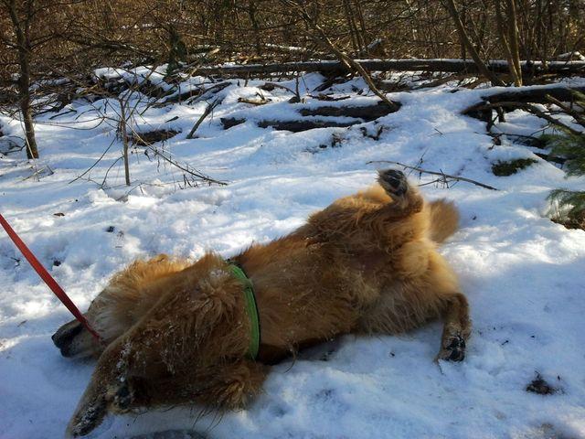 Erik wälzt sich im Schnee