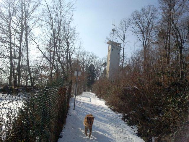 Der Uhlbergturm