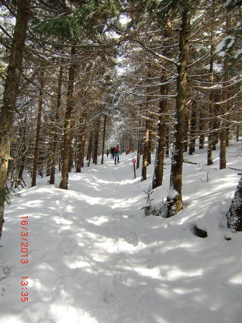 Durch verschneiten Wald nach oben