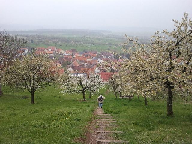 Blüten bei Mönchberg