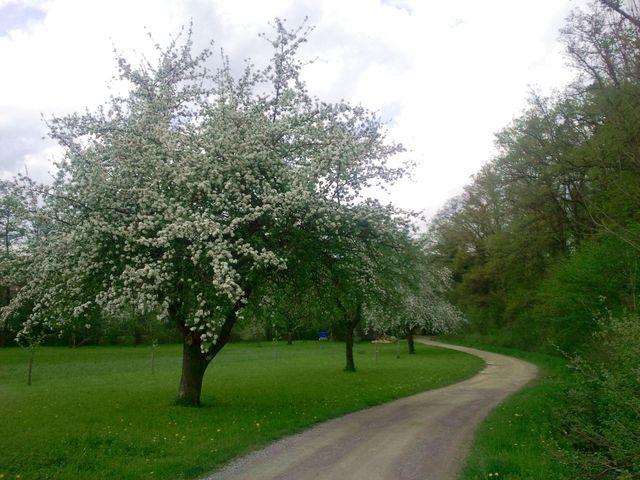 Blüte im Schaichtal