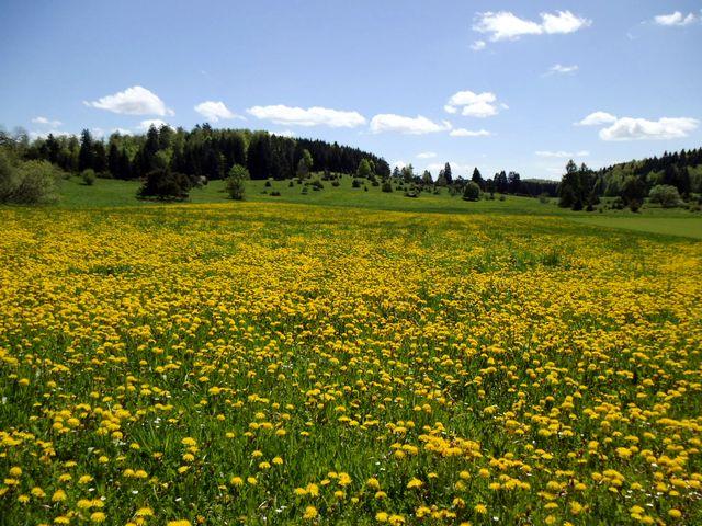 Blühende Wiesen