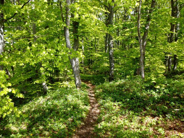 Stiller Waldpfad