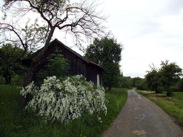 Weg durch die Wiesen