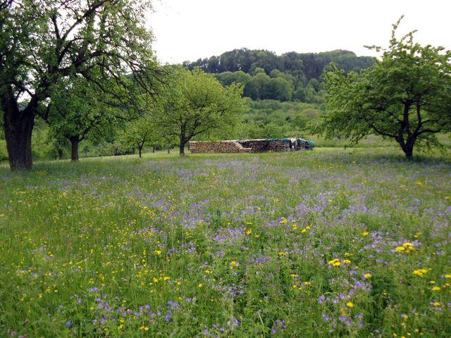 Zwischen Neuffen und Kohlberg durch blühnde Wiesen