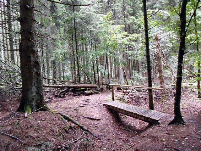Wald bei Weiskirchen
