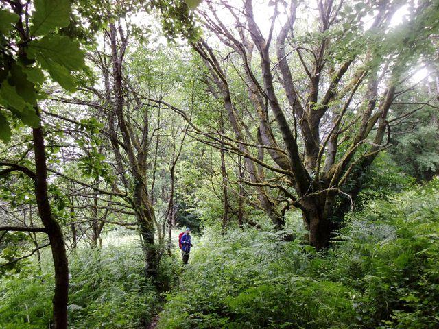 Urwüchsiger Wald
