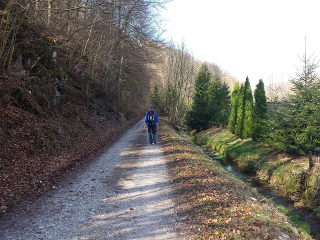Waldweg bei Seeburg