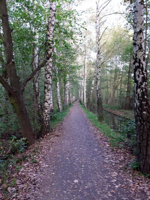 Weg zwischen Lehde und Leipe