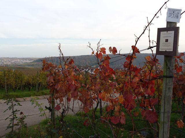 Wein der Felsengartenkellerei