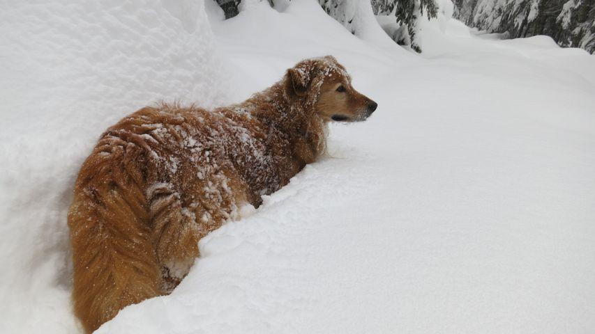 Erik, versunken im Schnee