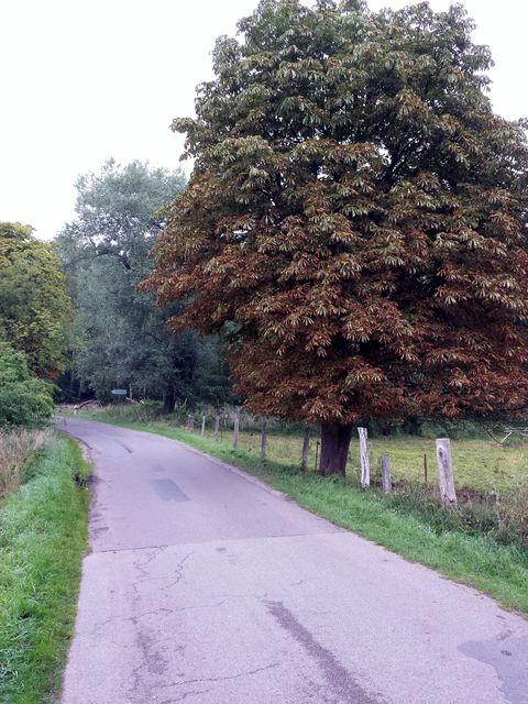 Straße Richtung Schwarzenhof
