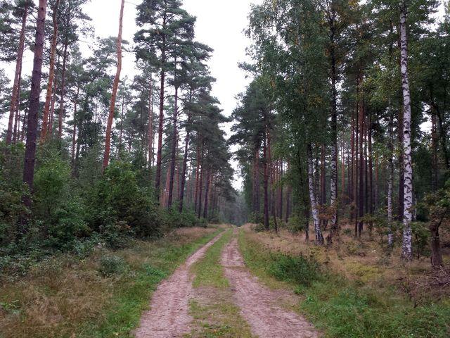 Wald bei Speck
