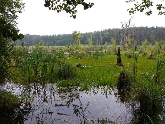 Am Mühlensee