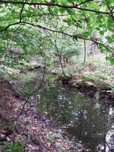 Abfluss vom Mühlensee
