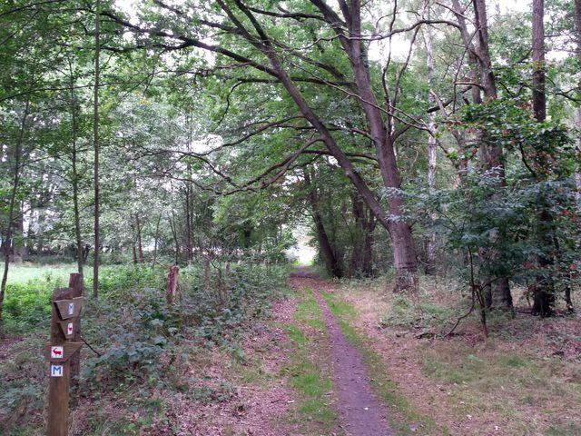 Müritz Nationalpark Weg