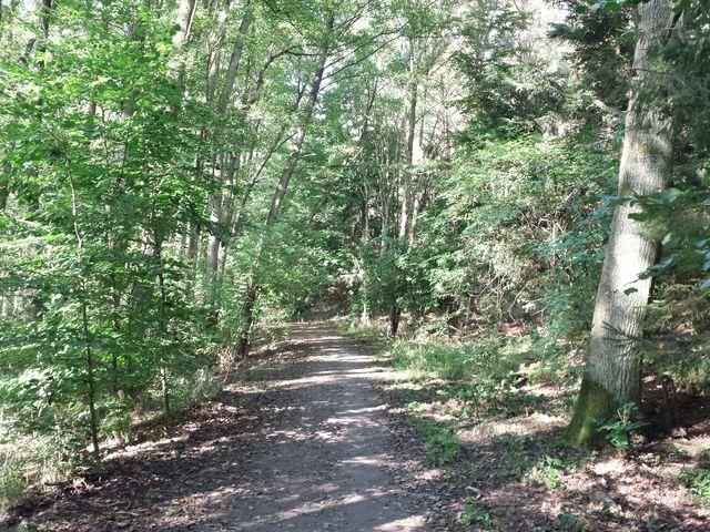 Wald hinter Schwarzenhof