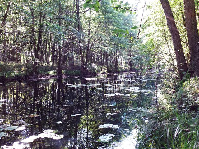 Abfluss des Specker Sees