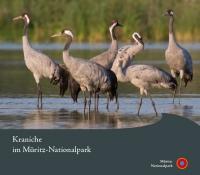 Kraniche im Nationalpark Müritz