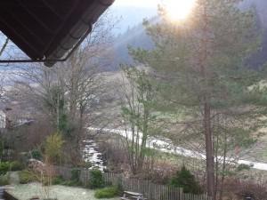Blick auf den Bach und Wald